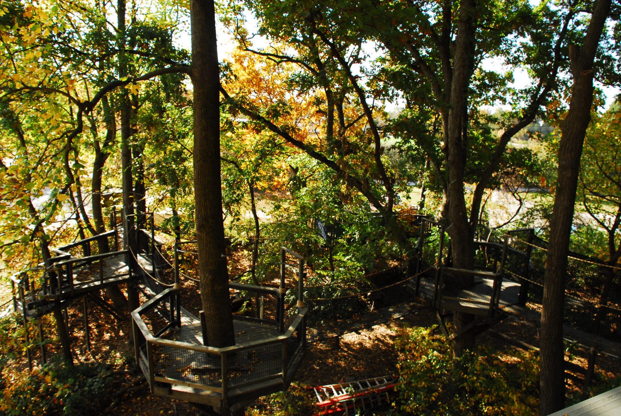 Tree Bridges