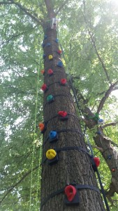 Rock Climbing Route on Trees