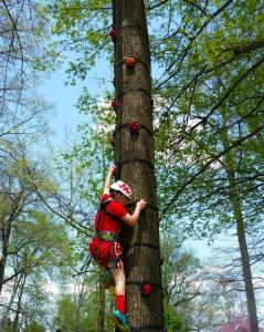 Rock Climbing on a Tree