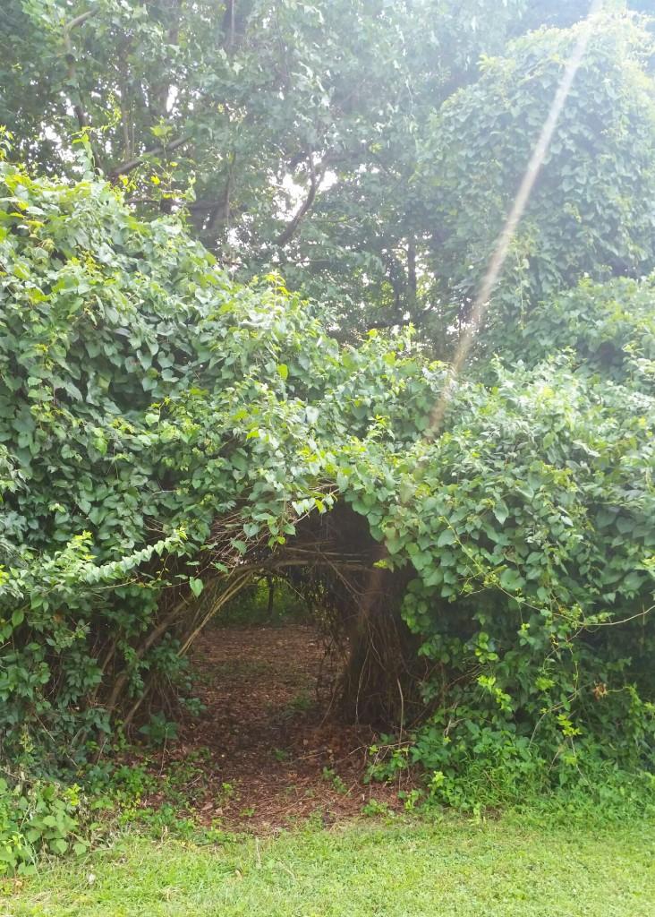 Tree Bridges 2